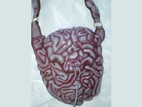intestine bag